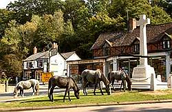 horses - Image courtesy of the New Forest Explorers Guide